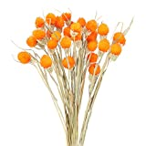 Migliori Fiori Secchi Arancioni – Guida all'acquisto